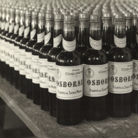 Foto donde aparecen miles de botellas antiguas apiladas unas detrás de otras de la marca Coquinero (amontillado)
